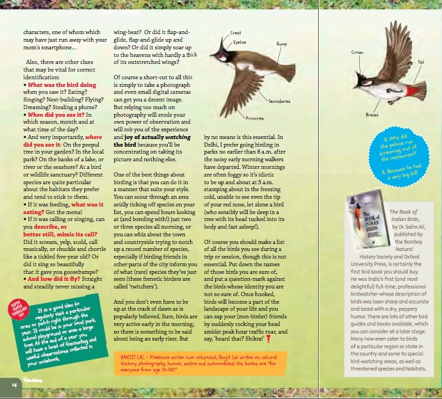 How to be a birder 2